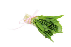 Ramson onion cluster Royalty Free Stock Photography