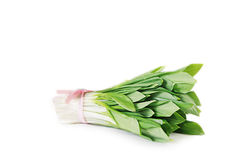Ramson onion cluster Stock Photography
