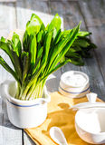 Ramson with sour cream and salt to the light board Royalty Free Stock Photos