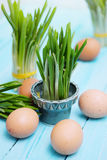 Ramson sprouts and boiled eggs Stock Photography