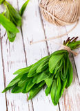 Ramson which is tied up by a twine royalty free stock images
