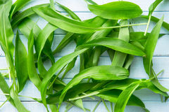 Ramson or wild garlic leaves. On blue kitchen table. Top view Stock Photos