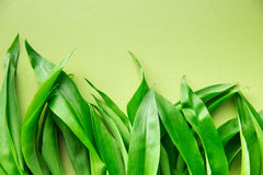 Ramson or wild garlic leaves. On green background. Top view Stock Photos