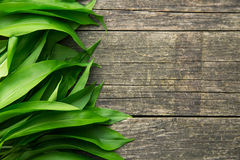 Ramson or wild garlic leaves. On old wooden table. Top view Stock Images