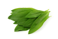 Ramsons Stock Photo