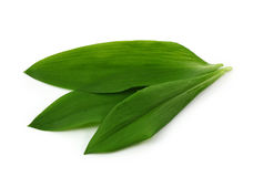 Ramsons. Isolated on white background Stock Images
