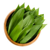 Ramsons, Allium ursinum in wooden bowl. Ramsons in wooden bowl. Fresh leaves of Allium ursinum, also called buckrams, wild garlic or bear leek. Wild relative of Royalty Free Stock Images