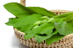 Ramsons in a basket. Fresh ramsons in a basket over white background Stock Photography