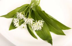 Ramsons. Leaves and flowers of wild bear garlic on a white background Royalty Free Stock Photography