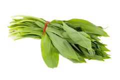 Ramsons (wild garlic) leaves Stock Photos