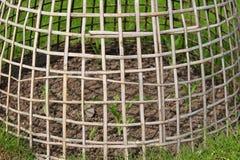 ramväxtskydd Fotografering för Bildbyråer