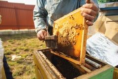 Ramy pszczoła rój Pszczelarka zbiera miód Pszczoła palacz używa uspokajać pszczoły przed ramowym usunięciem obraz royalty free