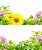 Ramy z lato kwiatami Obraz Royalty Free