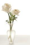 Ranúnculo blanco en florero fotografía de archivo libre de regalías