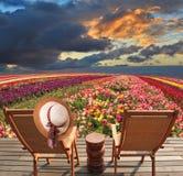 Ranúnculo Bloomingdale - cresça tiras multi-coloridas Foto de Stock Royalty Free