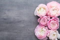 Ranúnculo bonito cor-de-rosa no fundo cinzento Fotografia de Stock