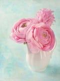Ranúnculo rosado Foto de archivo libre de regalías