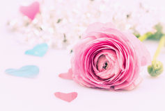Ranúnculo rosado y muchos corazones Imagenes de archivo