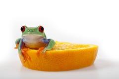 Rana anaranjada foto de archivo libre de regalías