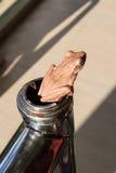 Rana arancio comune del cespuglio che si siede sulla recinzione Fotografia Stock