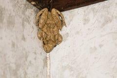 Rana beige grande en la ducha Fotos de archivo