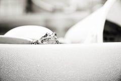 Rana blanco y negro Imágenes de archivo libres de regalías