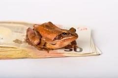 Rana che si siede su una pila di cinquanta euro banconote Una rana di molla di It(rana dalmatina) Immagini Stock