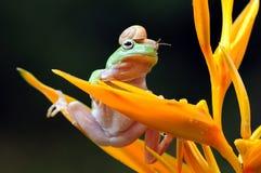 Rana con el caracol en las hojas Imagen de archivo