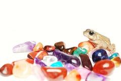 Rana con le gemme Fotografia Stock Libera da Diritti