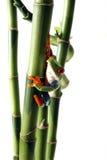 Rana de árbol curiosa imágenes de archivo libres de regalías
