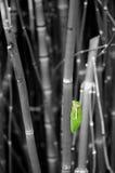 Rana de árbol de Colorized Fotografía de archivo