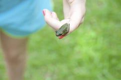 Rana de árbol minúscula Imagen de archivo libre de regalías