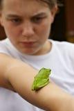 rana de árbol verde en el brazo Fotos de archivo libres de regalías