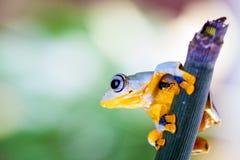 Rana de la selva en el ambiente natural Imagen de archivo libre de regalías