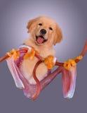 Rana del cucciolo Fotografia Stock