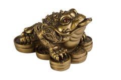 Rana del dinero Imagen de archivo libre de regalías