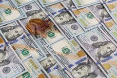 Rana della giada di ricchezza Fotografia Stock Libera da Diritti