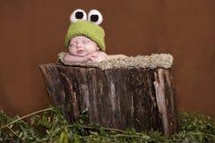 Rana di albero del bambino Fotografie Stock Libere da Diritti