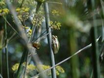 Rana di albero verde su un ramo del finocchio Fotografie Stock