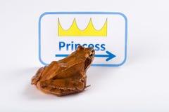 Rana di primavera (rana dalmatina) sul modo dei itbaciare la principessa Immagini Stock Libere da Diritti