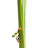 Rana en blanco aislado planta Imagen de archivo libre de regalías