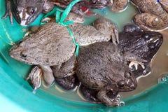 Rana en el bazar, rana viva para la venta en el foco selectivo del mercado imagen de archivo libre de regalías