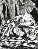 Rana en el bosque Fotos de archivo libres de regalías