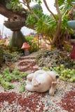 Rana en el jardín Fotografía de archivo libre de regalías