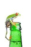 Rana en el primer de la botella aislado Foto de archivo libre de regalías