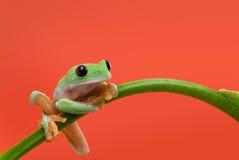 Rana en fondo anaranjado Imagen de archivo libre de regalías