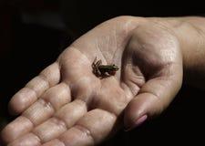 Rana en la mano Foto de archivo libre de regalías