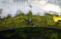 Rana en la pared cubierta de musgo Fotografía de archivo libre de regalías