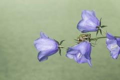 Rana en las flores Imágenes de archivo libres de regalías