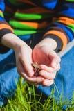Rana en las manos de un niño Fotos de archivo